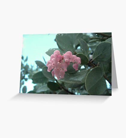Manzanita Blossoms Greeting Card