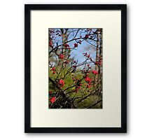 Lovely Limbs Framed Print
