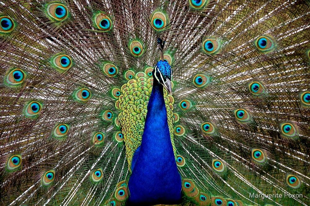Ol' Blue Eyes by Marguerite Foxon