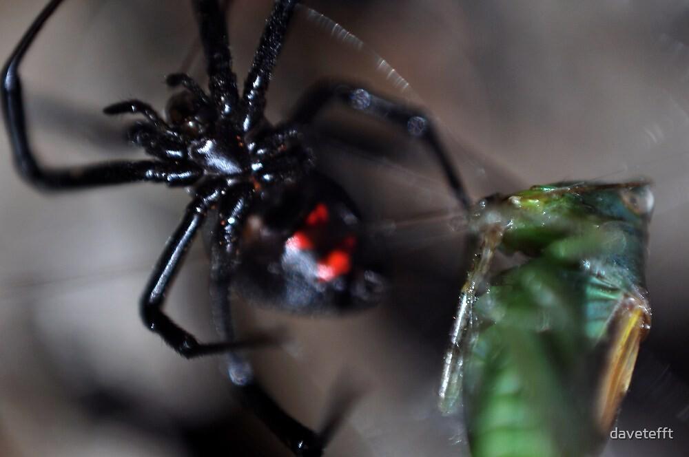 Black Widow by davetefft