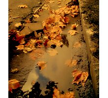 Auburn Rain Photographic Print