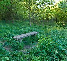 Wilstead Wood in May by fotdmike
