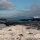 Galapagos Islands: Beach and Yachts with Crabs by tpfmiller