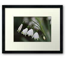 Snowdrops in a Row Framed Print
