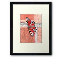Peacock Butterfly on a Wall Framed Print