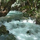 Banias Waterfall Israel by Ilunia Felczer