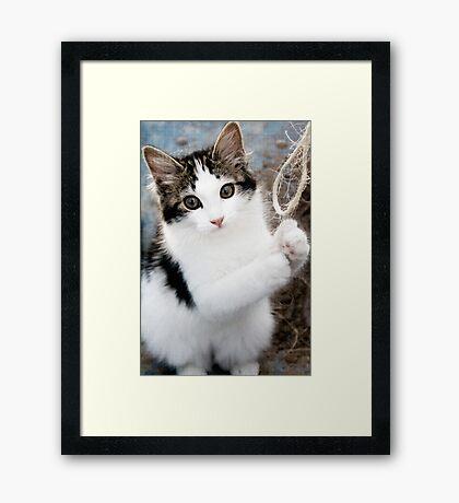 Frodo Framed Print