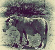 Wild horse by Melissa Drummond