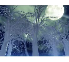 Moonlight Forest Photographic Print