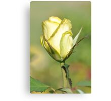 Yellow Beauty On A Stem Canvas Print