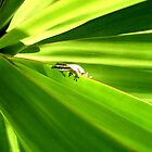 green gecko by anoopjoysury