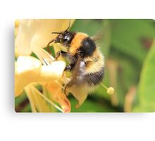 Bumble on the honeysuckle Metal Print