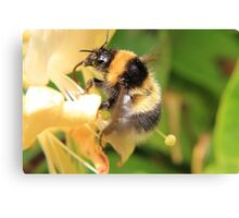 Bumble on the honeysuckle Canvas Print