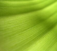 banana leaf by anoopjoysury