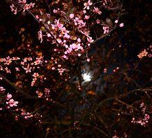 Pink night by Nicoras Calin