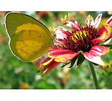 Flowerfly Photographic Print