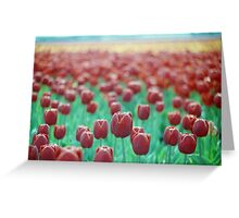 Tulips on the Horizon Greeting Card