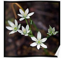 Flowers Squared - White Poster