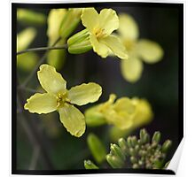 Flowers Squared - Yellow Poster