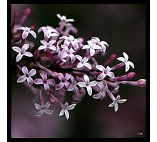 Flowers Squared - Sweet Photographic Print