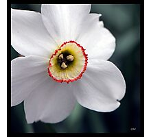 Flowers Squared - Daffodil Photographic Print