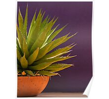 Agave on a Purple Wall Poster