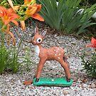 deer beauty by Bonnie Pelton