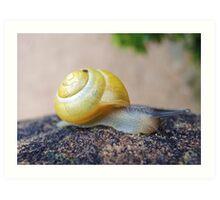 Yellow Snails Bring Joy  Art Print