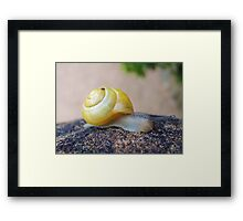 Yellow Snails Bring Joy  Framed Print