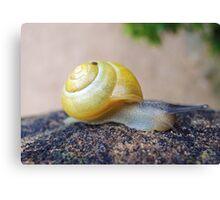 Yellow Snails Bring Joy  Canvas Print