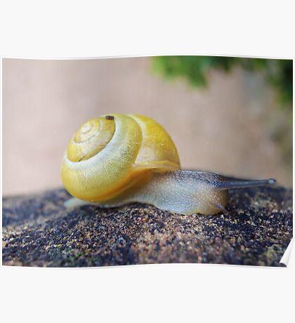 Yellow Snails Bring Joy  Poster