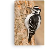 One peck at a Time Canvas Print