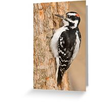 One peck at a Time Greeting Card