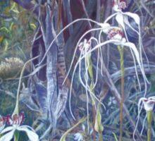 Spiders at Bullock Hills Dumbleyung Sticker