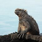 Galapagos Islands: Massive Marine Iguana by tpfmiller