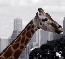 It's a jungle in the city by Nichole Lea