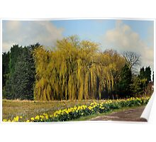 Willow & Daffodils Poster