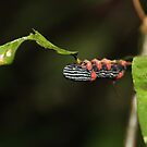Bolivian Rainforest: Caterpillar by tpfmiller