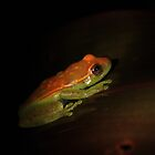 Peruvian Rainforest: Tree Frog by tpfmiller