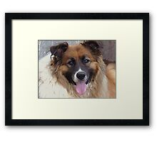 This Was T-Bone....Best Dog In The World!!! Framed Print
