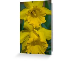 Pair of daffodils  Greeting Card
