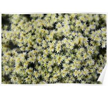 Pacific Northwest Rock Moss in Springtime Poster