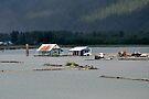 Loggers Camp - Stewart, BC Canada by Barbara Burkhardt