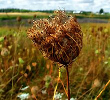 Gone to Seed by RC deWinter