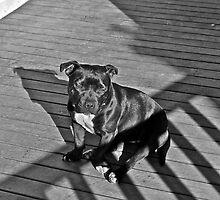 Bessie by Howard Melder