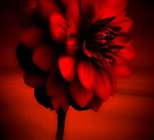 The Beauty of Red by missmoneypenny
