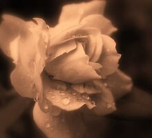 Monochrone Rose by Evita