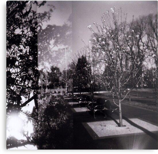 Bloom trees in Carlton by Jodi Fleming