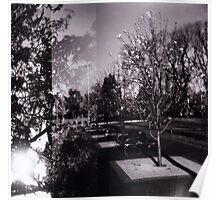 Bloom trees in Carlton Poster