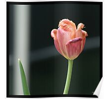 Flowers Squared - Tulip Poster